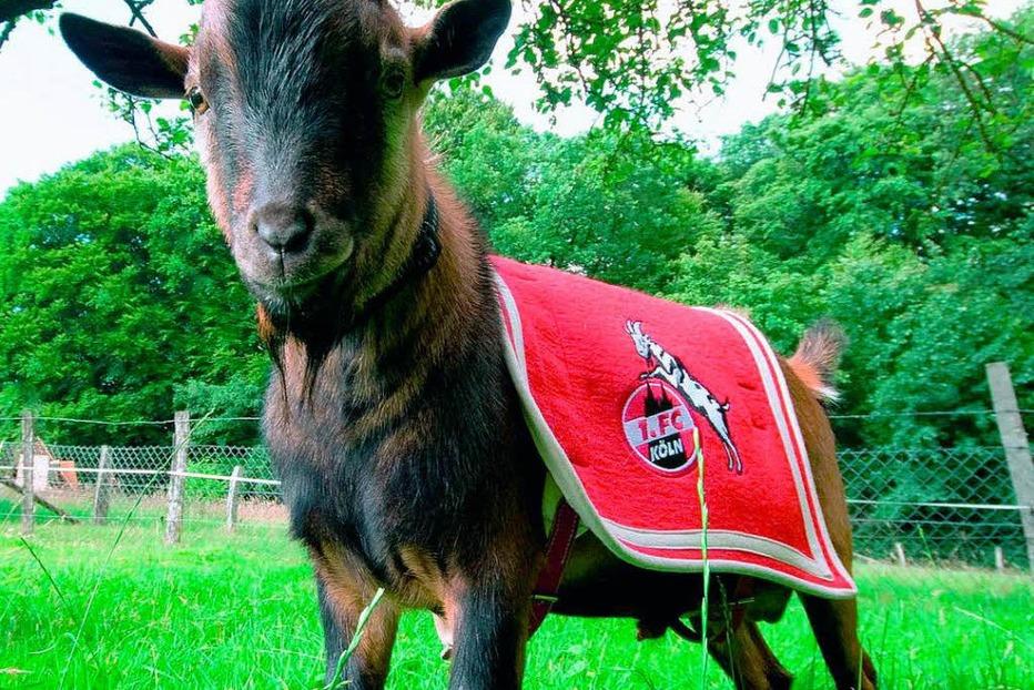 Wo wurden die Spieler des 1.FC Köln geboren? - Badische Zeitung TICKET