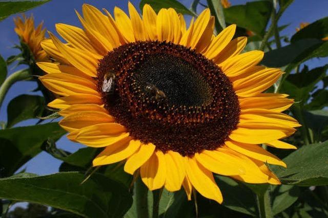 Erst die Sonne, dann die Blumen