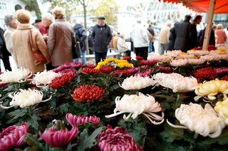"""Die Chrysanthema 2010 soll ein """"Blütenmärchen"""" werden"""