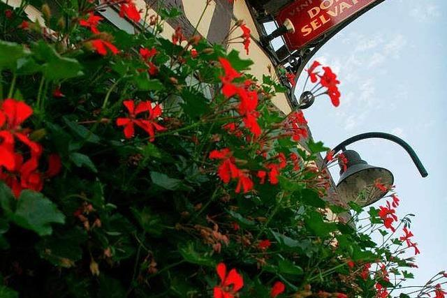 Offenburg: Donna Selvatica