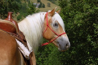 Auf dem R�cken der Pferde