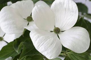 Tausende Blumen sorgen für Frühlingsgefühle