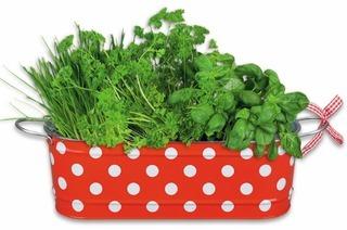 Tipps für den Gewürzkräuteranbau
