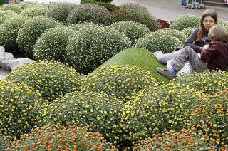 Ein Blumenmeer wartet auf die Gäste