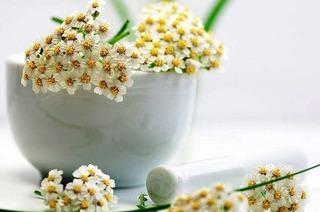 Schafgarbe hilft bei Ekzemen und Menstruationsbeschwerden