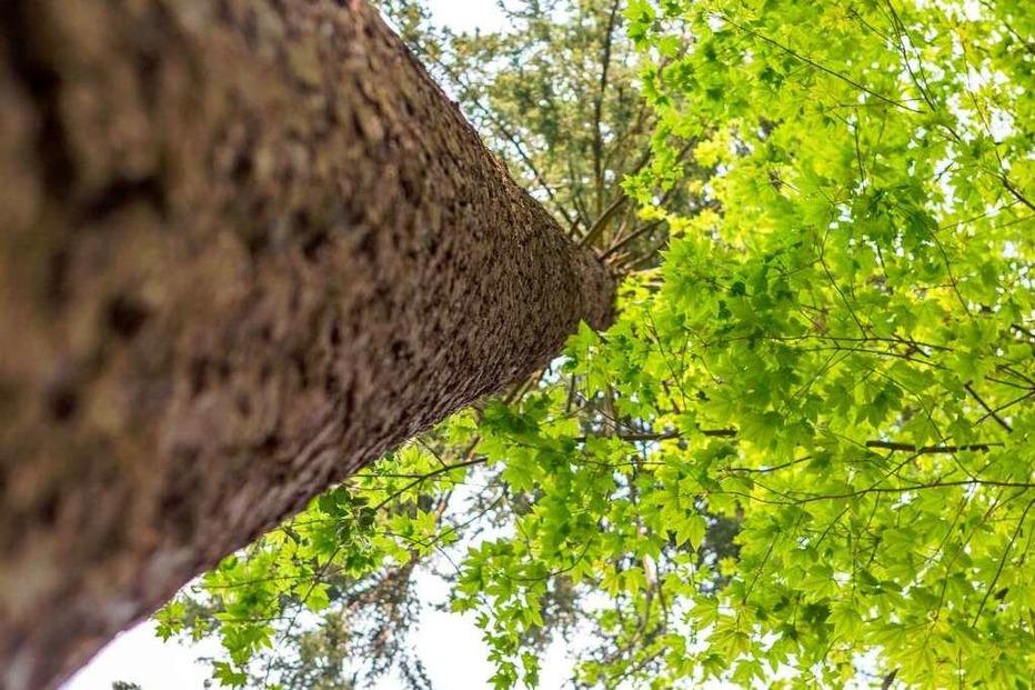 Fotos: Oh mein Schwarzwald, du grüne Hölle
