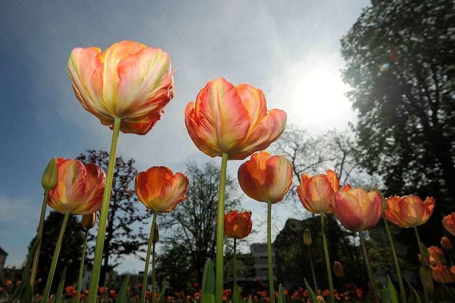 Fotos: Zu Besuch auf der Landesgartenschau Schwäbisch Gmünd