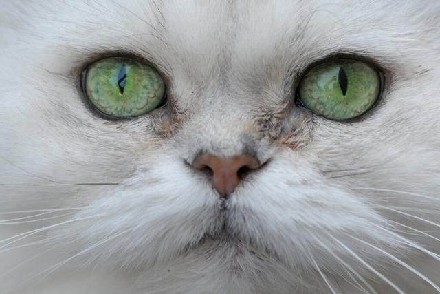 Katze in Diskothek verursacht Polizeieinsatz