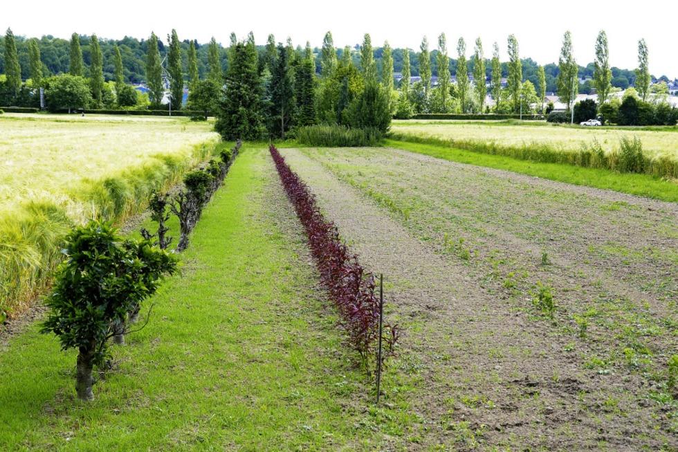 Kampf um Landesgartenschaugelände: Die Fakten zum Fall Grafmüller - Badische Zeitung TICKET