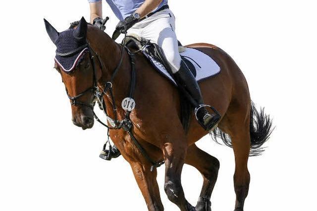 Reiter Daniel Armbruster und die tägliche Auseinandersetzung mit einem Tier