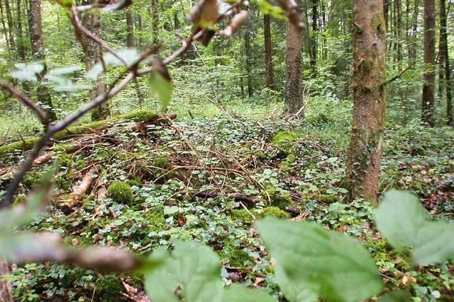 Heidengräber bei Wiechs: Wandeln im Wald der Toten aus Jahrtausenden