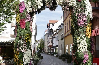 Am Wochenende beginnt die Chrysanthema 2014