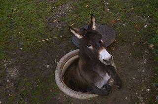 Feuerwehr rettet verunglückten Esel aus Schacht