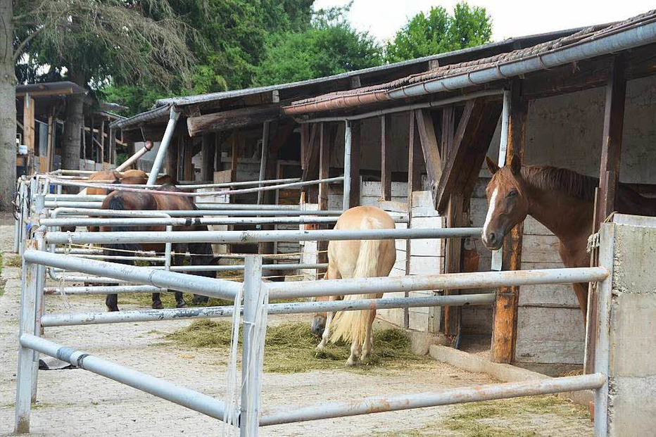 Reiterhof Frech-City Karsau - Rheinfelden