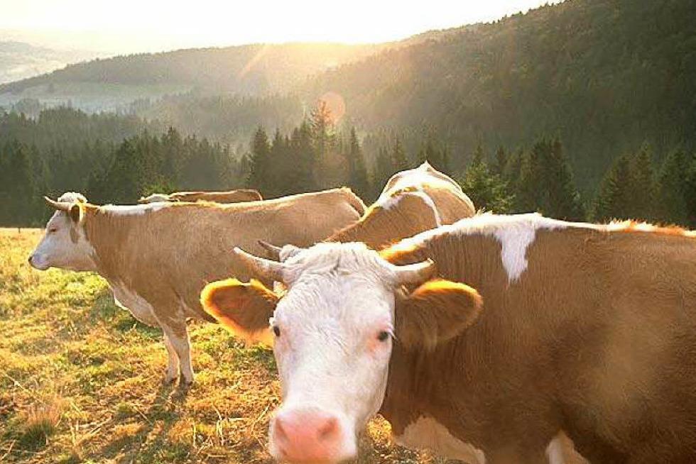 Weidelehrpfad Präg-Herrenschwand - Todtnau