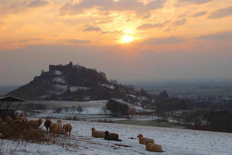 Schlossberg - Staufen