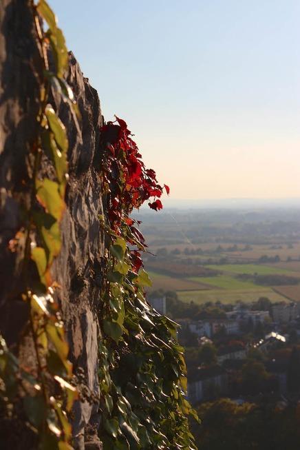 Staufener Burg - Staufen