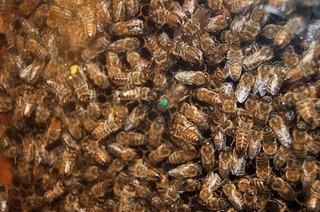 Bienenkunde-Museum