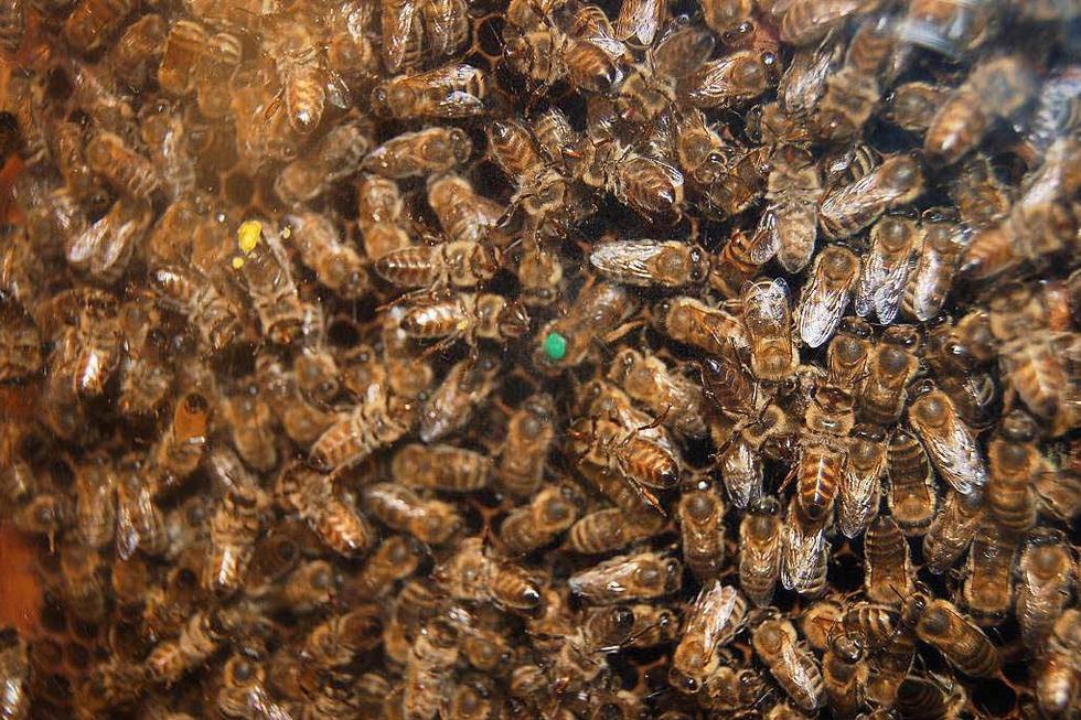 Bienenkunde-Museum - Münstertal