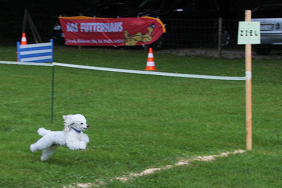 Hundesportplatz Pudel-Club Fahrnau - Schopfheim
