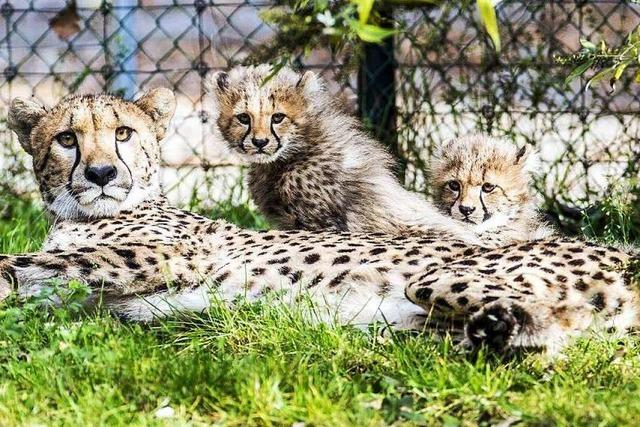 Zoo und Tiergehege