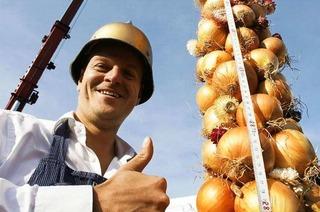 Die Zwiebel wirkt antibakteriell und antiviral