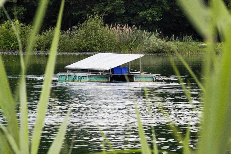 Auwaldsee - Lahr