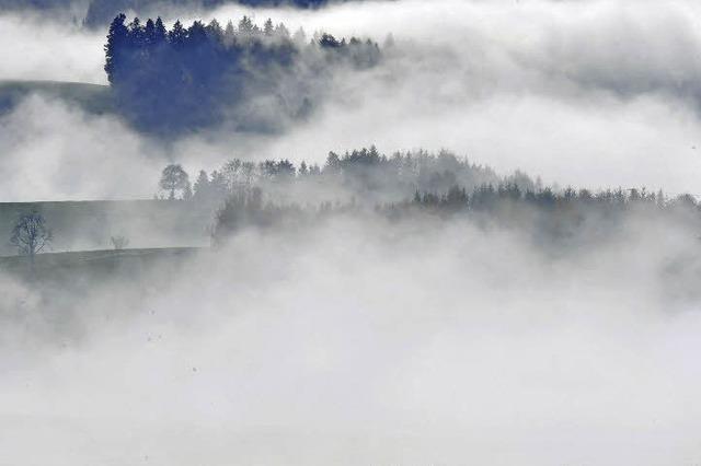Der Nase nach auf der Käseroute im Naturpark Südschwarzwald