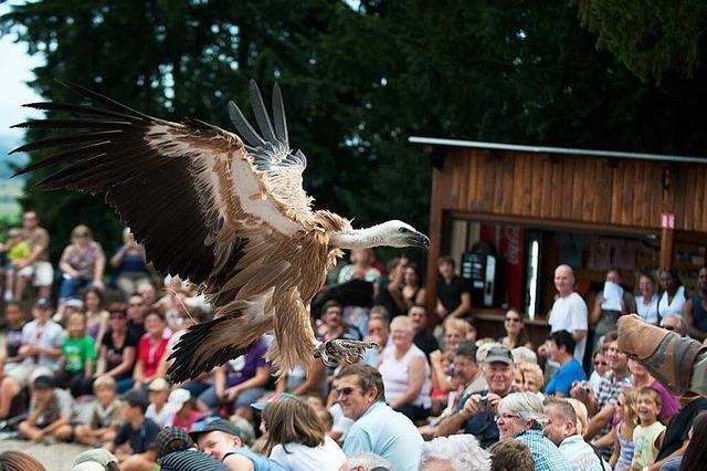 Greifvogelpark Volerie des Aigles