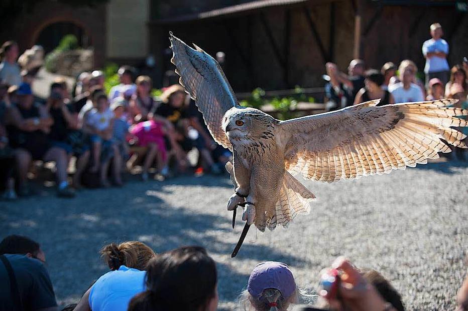 Greifvogelpark Volerie des Aigles - Kintzheim