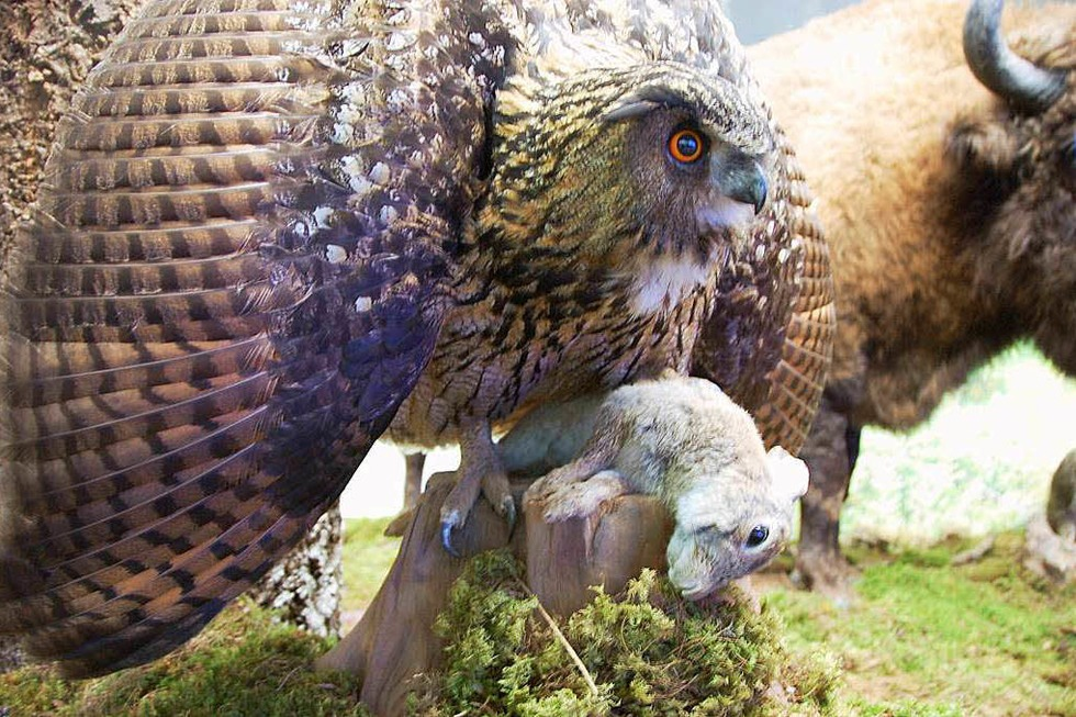 Wildlife Naturkundemuseum - Bad Säckingen