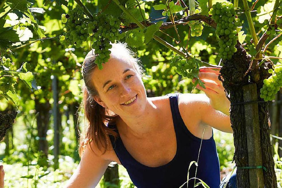 Weingut Trautwein - Bahlingen