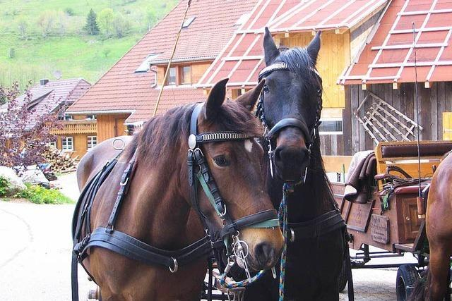 Pferdehof Zimmermann (Weg)