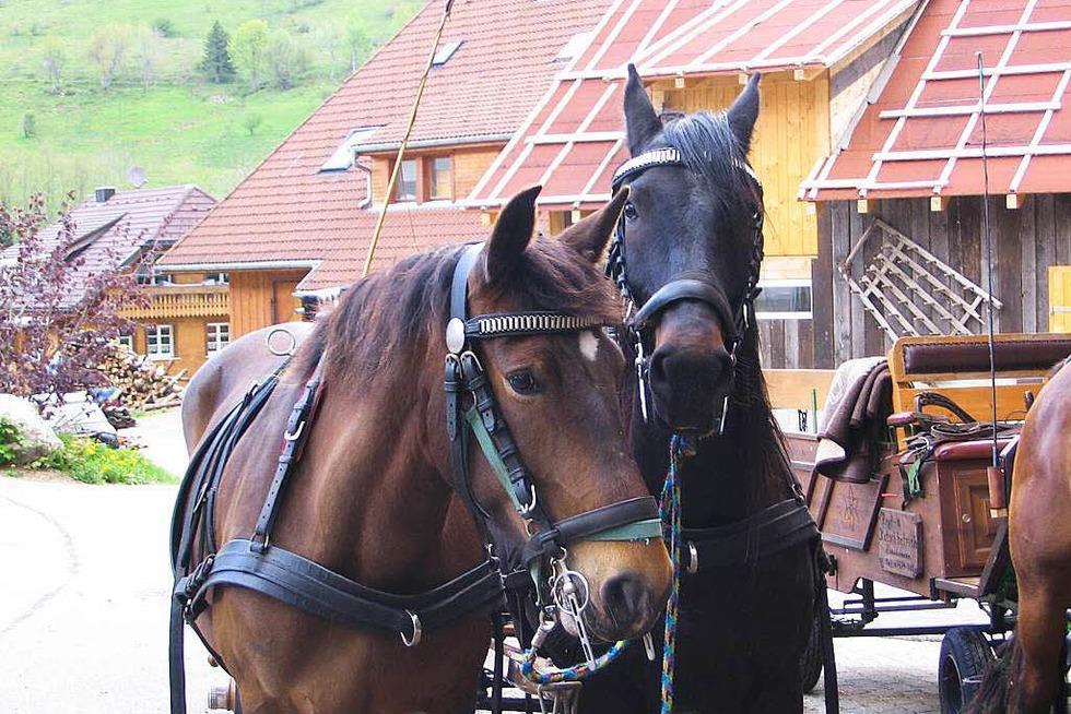 Pferdehof Zimmermann (Weg) - Todtmoos