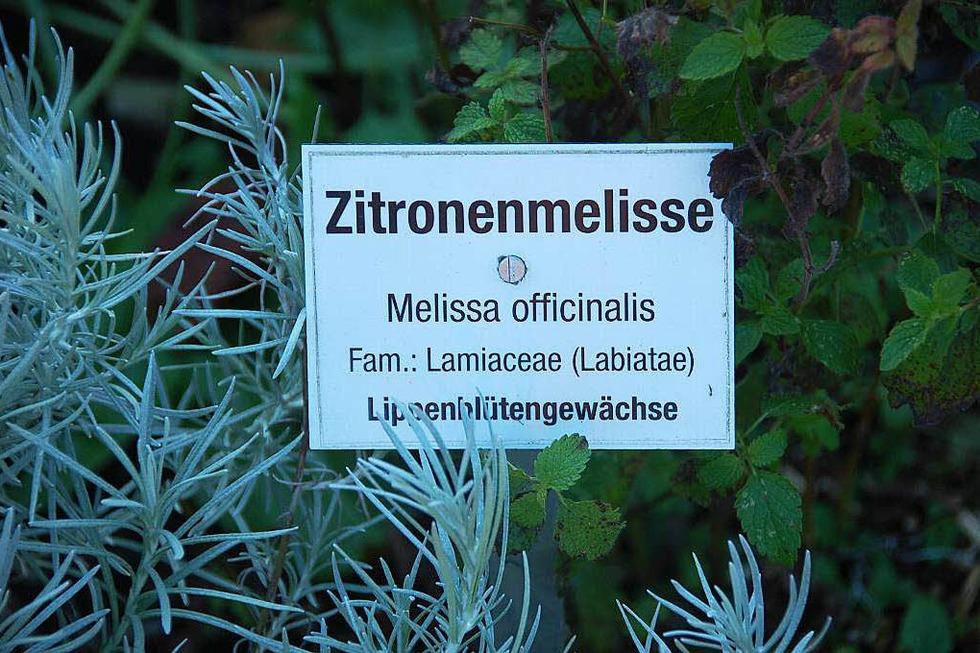 Kräutergarten - Oberried