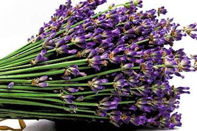 Der Lavendel wirkt auch als Liebestrank