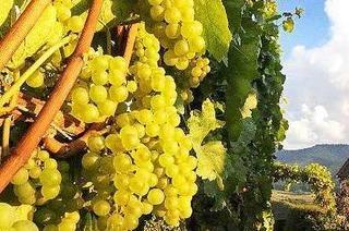 Weing�ter und Winzerh�fe