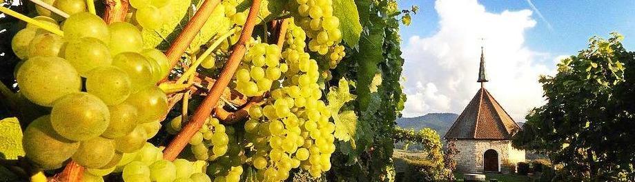 Weingüter und Winzerhöfe
