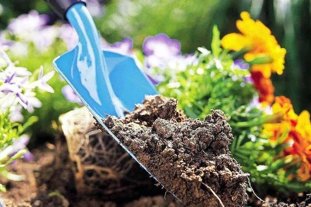 Warum in Deutschland das Gartenvirus umgeht