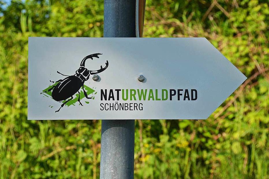 Naturwaldpfad am Sch�nberg - Ebringen