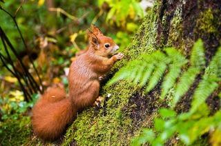 Eichhörnchenwald