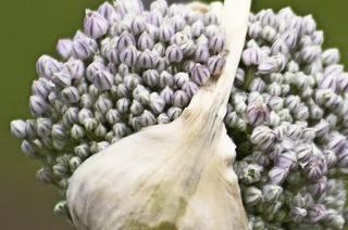 Die Letzten ihrer Art – der Samengarten in Eichstetten