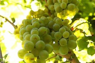 Weingut Bader (Opfingen)