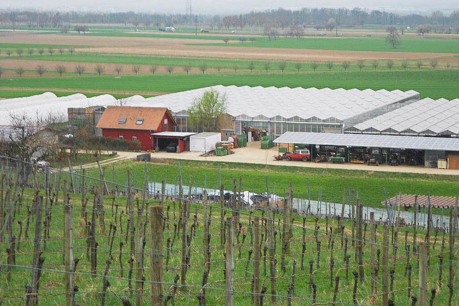 G�rtnerei Hoch-Reinhard - Fischingen