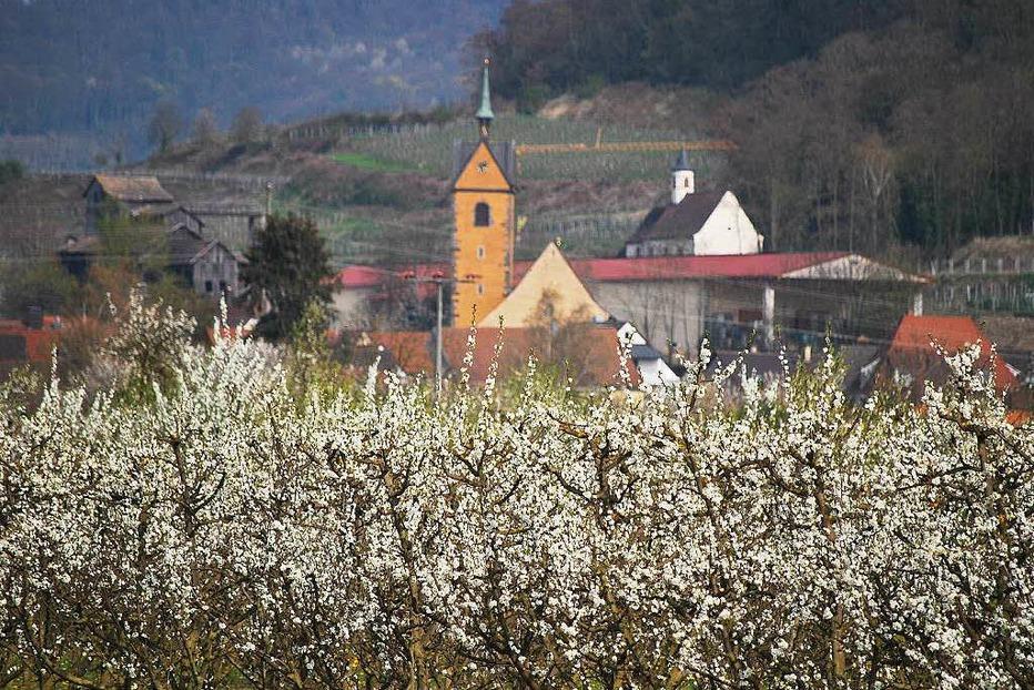 Kath. Kirche St. Michael (Niederrotweil) - Vogtsburg