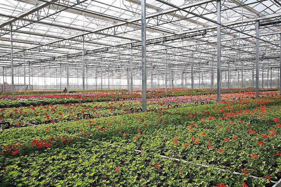 Pflanzencenter Keller - Malterdingen