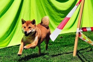 Hundeplatz Lehen