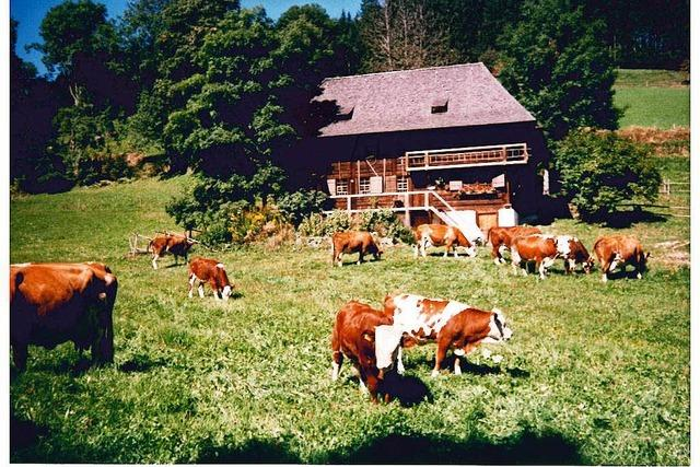 Öhlermühle in der Schildwende (Titisee)