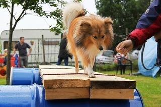 Hundesportverein