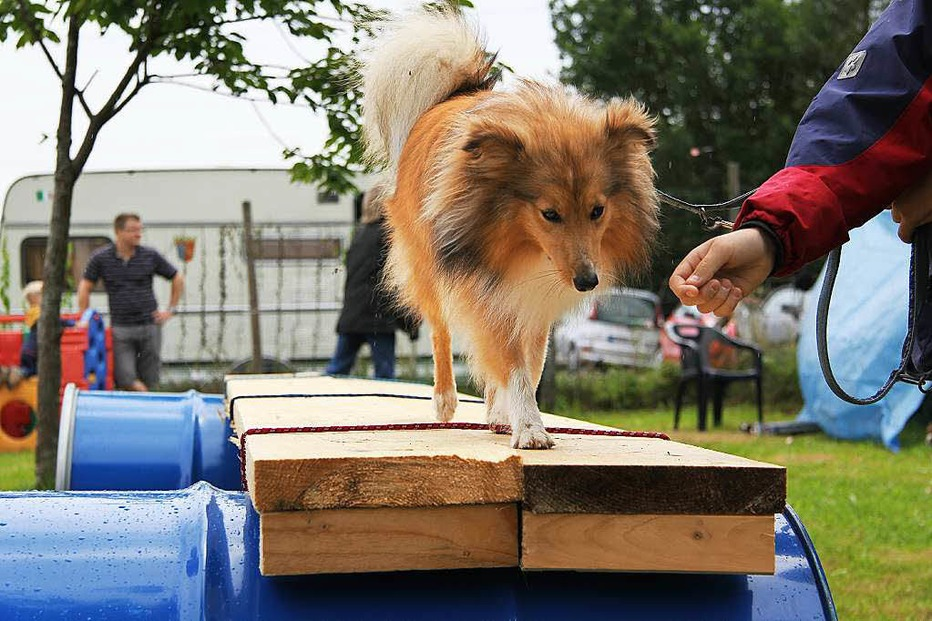 Hundesportverein - Maulburg
